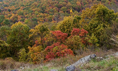 """CRW_4550: Skyline Drive Foliage • <a style=""""font-size:0.8em;"""" href=""""http://www.flickr.com/photos/54494252@N00/8705425/"""" target=""""_blank"""">View on Flickr</a>"""
