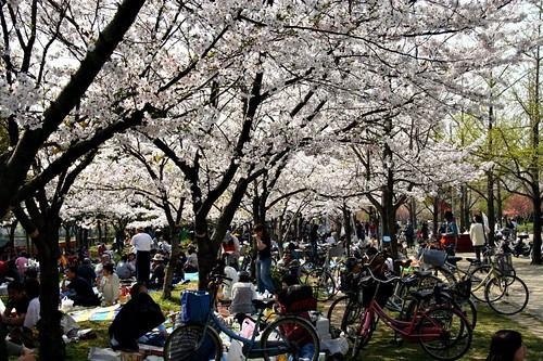 Hanami parties under the trees by JanneM.
