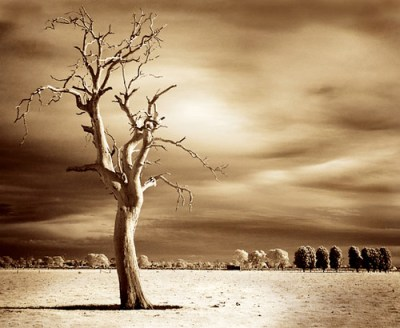 """lost in time"" - infrared photograph, Australia"