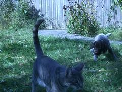 Oscar and Mandrake