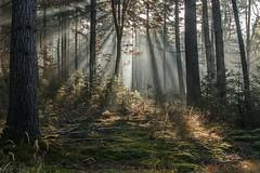 Zonnestralen door de bomen