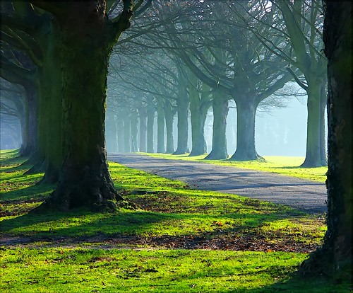 The Avenue in mists and sun por algo.