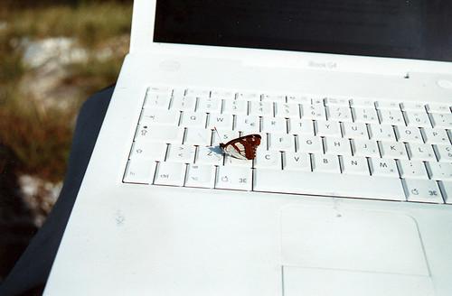 mac-butterfly-3