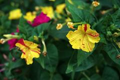 memleket bahçesi çiçekleri