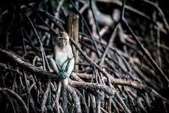monkeys-1022