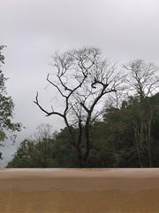 Kollibacchalu Dam -Malenadu Heavy Rain Effects Photography By Chinmaya M.Rao   (89)