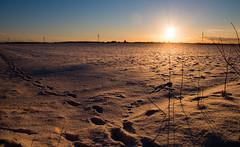2017-01-17-Winterwonderland