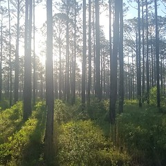 Morning in the woods. I am a very lucky man. Outside Newport, NC. #theworldwalk #NC #travel #camp #hike #sun #woods #twwphotos