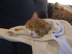 Felix - wrapped in a blanket