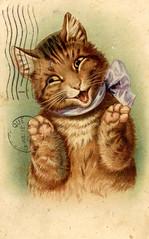 Smiling cat 1909