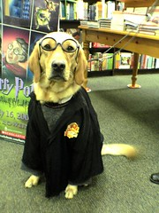 Harry Potter Dog at Barnes and Noble Cumberland by lorax_2112