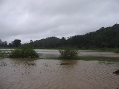 Kollibacchalu Dam -Malenadu Heavy Rain Effects Photography By Chinmaya M.Rao   (117)