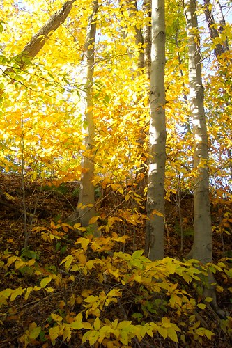 Autumn in Vermont 4