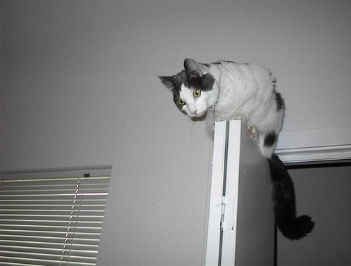On top of the laundry closet door