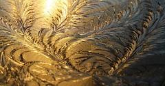 """Die Eisblume. Die Eisblumen. Es gibt Blumen, die an Fensterscheiben wachsen. Die Eisblumen. • <a style=""""font-size:0.8em;"""" href=""""http://www.flickr.com/photos/42554185@N00/32587836221/"""" target=""""_blank"""">View on Flickr</a>"""