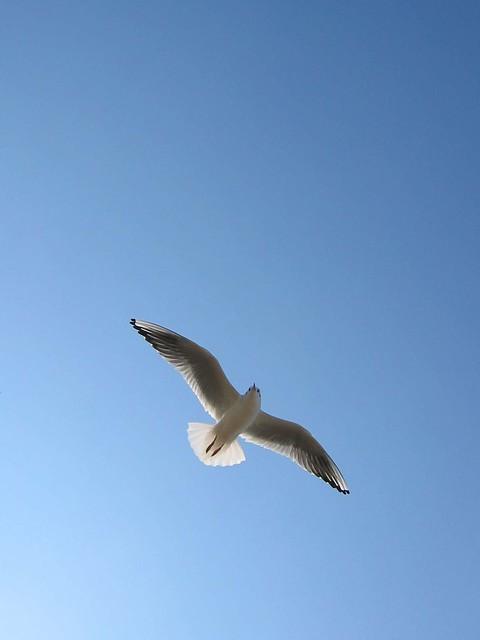 Skyward.