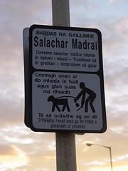 Salachar Madraí