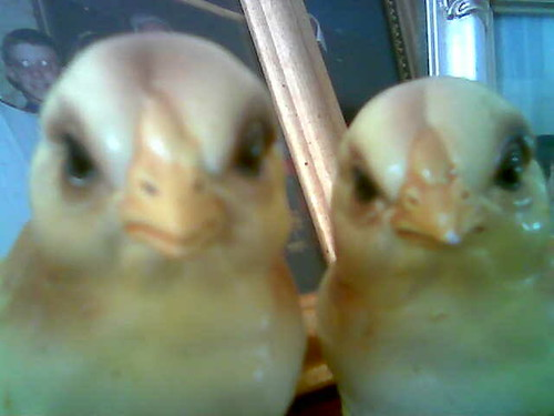 Angry Chicks by *lynne*.