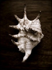 Shell Form