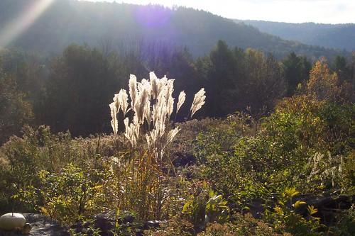 Autumn Seeds 1