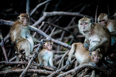 monkeys-1014