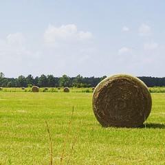 Roll O' Hay. Rt.17 in Awendaw, SC. #TheWorldWalk #farm #travel #sc #field #twwphotos