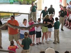 One Big Snake