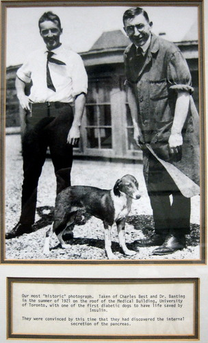 Banting, Best, and a dog