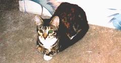 Kitten Z loaf