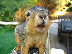When Squirrels Attack! The last thing I saw before the ER visit...