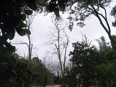 Kollibacchalu Dam -Malenadu Heavy Rain Effects Photography By Chinmaya M.Rao   (72)