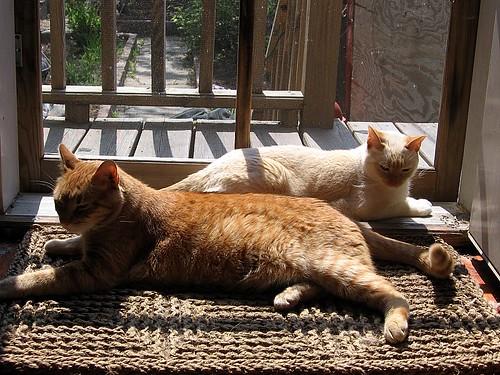 Lazy Saturday Sunbathing