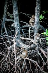 monkeys-1005