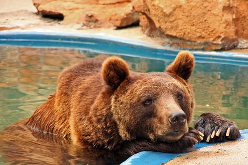 bear bored