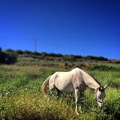 Skinny Horse #horse #caballo #bluesky #huelva #palosdelafrontera #españa #spain