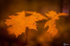 Sanspareil im Herbst-8