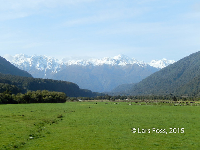 Along the road between Franz Josef and Harihari
