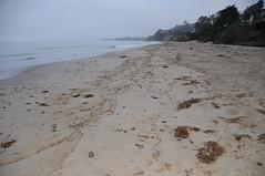 Oiled strand line Summerland 08-22-15r