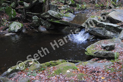seth-harris-natural-pool