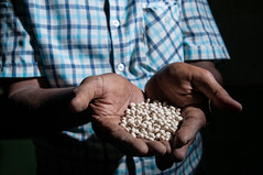 White pea beans in Ethiopia