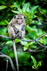 monkeys-1016