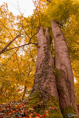 Sanspareil im Herbst-17