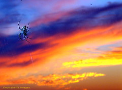 Sa-Dong Harbour Spider at Sunset 3