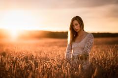 Field of Glimmering Wheat
