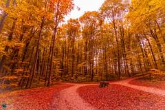 Sanspareil im Herbst-7