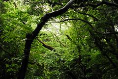 Yobuko forest.jpg