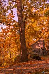 Herbst an der Saaleschleife-11