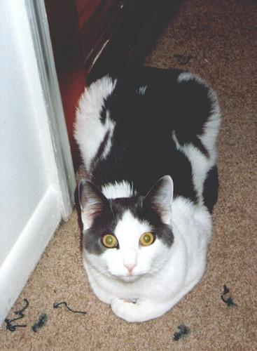 Aremid loaf