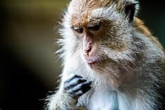 monkeys-1024