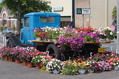 "IMG_9711: Flowers and a Truck • <a style=""font-size:0.8em;"" href=""http://www.flickr.com/photos/54494252@N00/178352611/"" target=""_blank"">View on Flickr</a>"